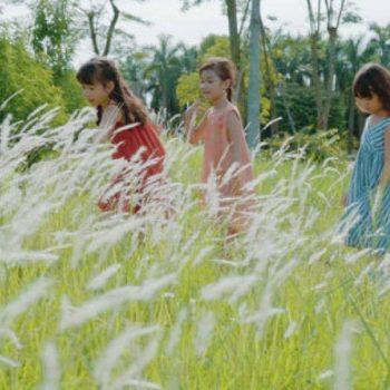 cánh đồng cỏ lau ecopark