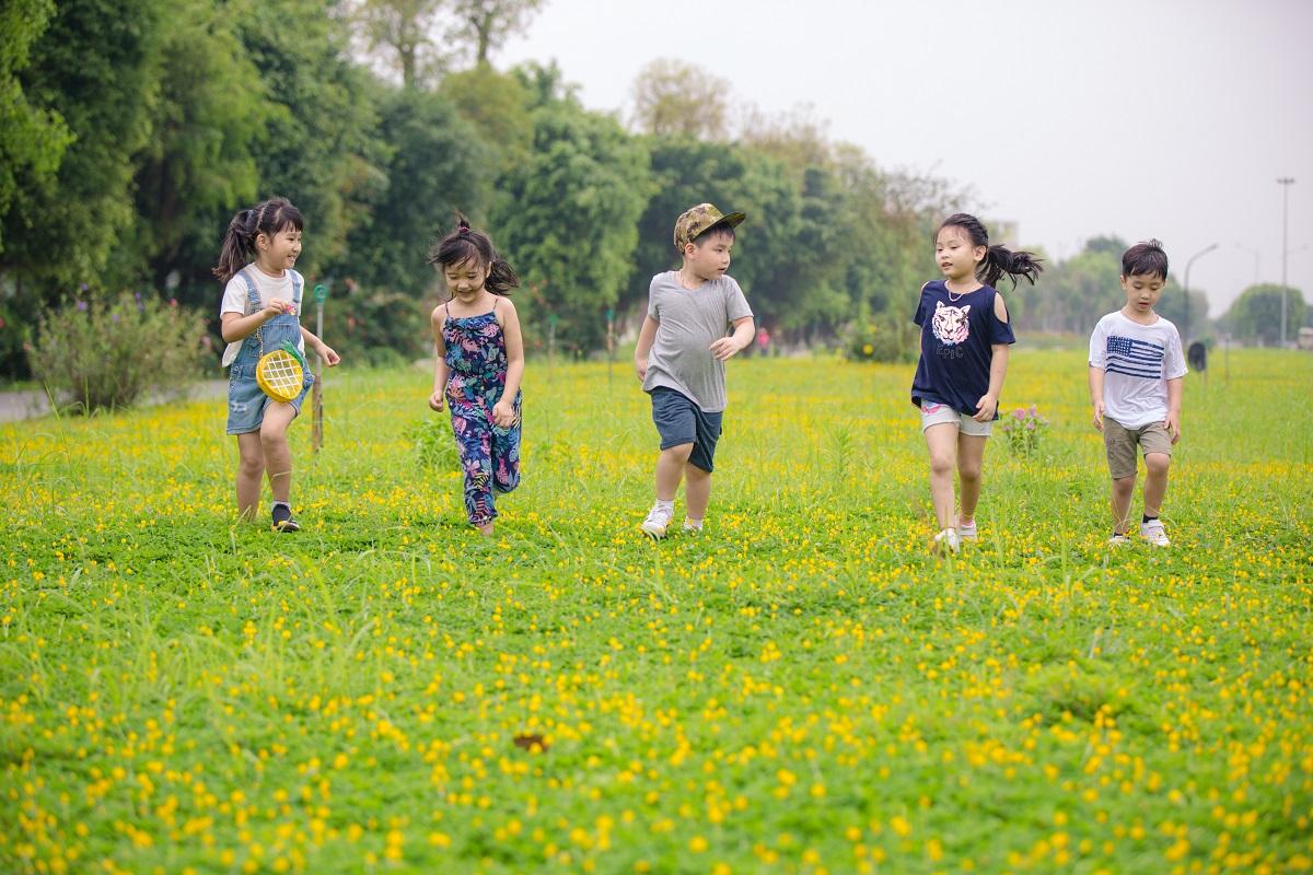 con đường hoa vàng trên cỏ xanh