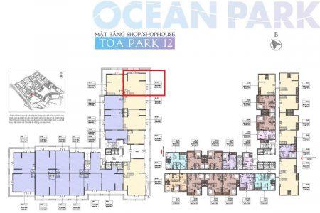 shophouse s2-12 vinhomes ocean park