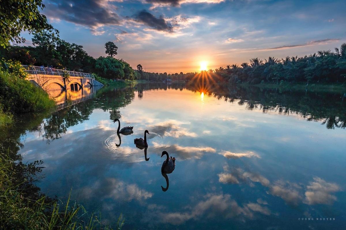 khung cảnh hồ thiên nga Ecopark